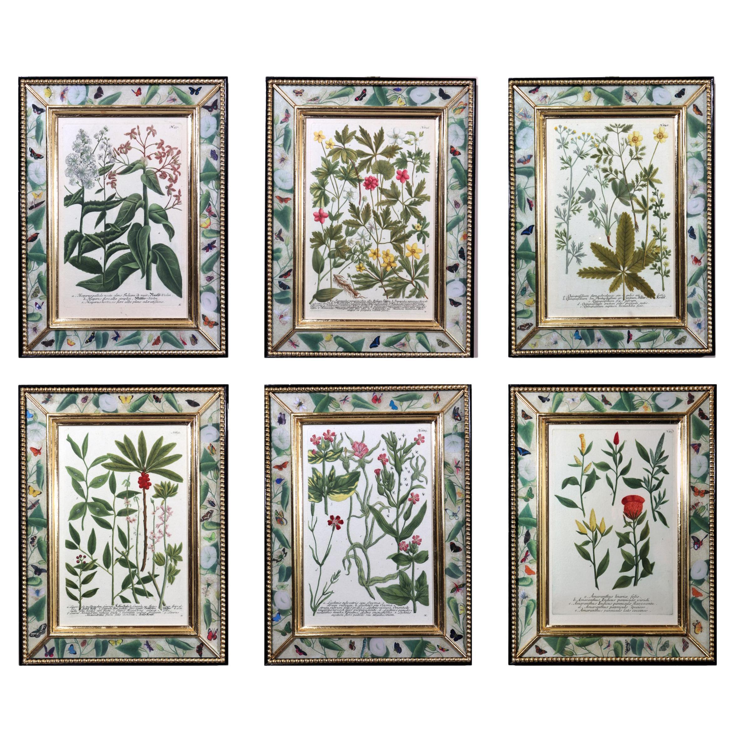 Johann Wilhelm Weinmann Botanical Engravings of Flowers, Set of Six, Circa 1740