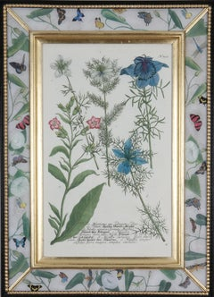 18th century botanical engraving in decalcomania frame.