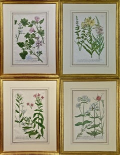 A Set of Four Framed 18th Century Hand Colored Botanical Engravings by Weinmann
