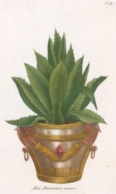 Aloe Plant Engraving