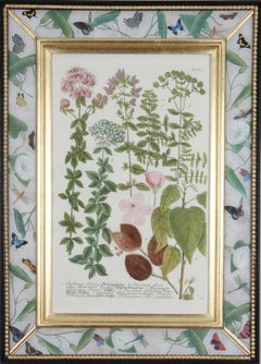 Eighteenth century botanical engraving set in a decalcomania frame.