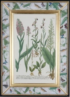 Eighteenth century botanical engraving set in a decalcomania frame
