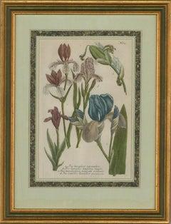 Johann Wilhelm Weinmann (1683–1741) - 18th Century Mezzotint, Irises