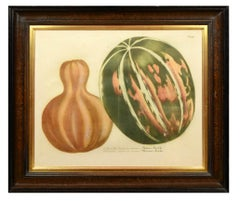 Johann Wilhelm Weinmann, Set of Four Gourds,  mezzotint engravings, 1737