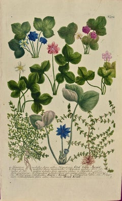 "Weinmann 18th Century Hand Colored Botanical Engraving ""Hepatica Nobilis Flore"""