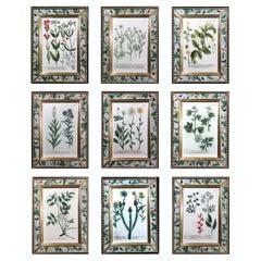 Johann Wilhelm Weinmann Botanical Engravings of Flowers-Set of Nine