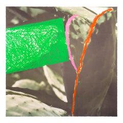 "Cactus, from ""Third Street, Santa Monica"", Contemporary Art, Concept Art"