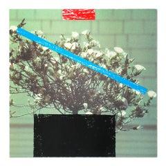 """Flower, from """"Third Street, Santa Monica"""", Contemporary Art, Concept Art"""
