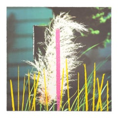 "Grass, from ""Third Street, Santa Monica"", Contemporary Art, Concept Art"