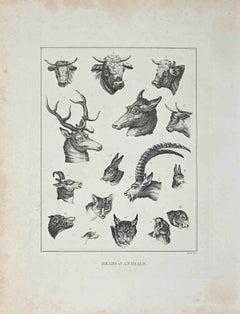 Heads of Animals - Original Etching by John Barlow - 1810