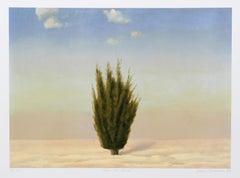 Cedar Tree, Israel