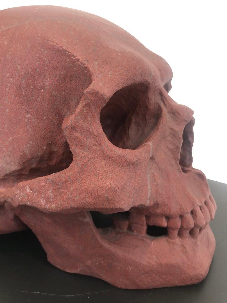 Human Skull II  For Sale 2