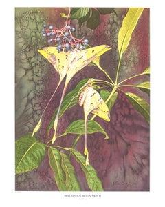 Malaysian Moon Moth by John Cody