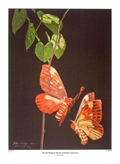 Royal Walnut Moth of North America by John Cody