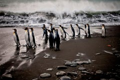 Antarctica 3, Penguins, Ocean, Photography, Travel, Waves, Black, White,unframed
