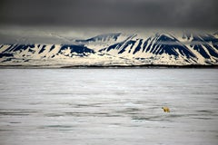 Arctic #5, Iceberg, Polar Bear, Limited Edition Photograph, Blue, Travel