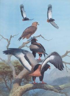 BATELEUR EAGLES