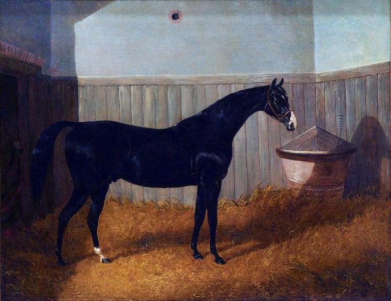 John Frederick Herring Jr. Animal Painting - A black thoroughbred horse in a stable by John Frederick Herring