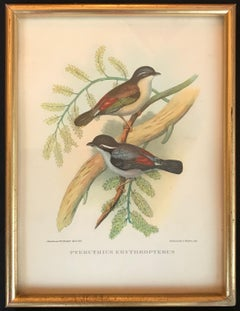 Birds of Europe by John and Elisabeth Goult, 1832
