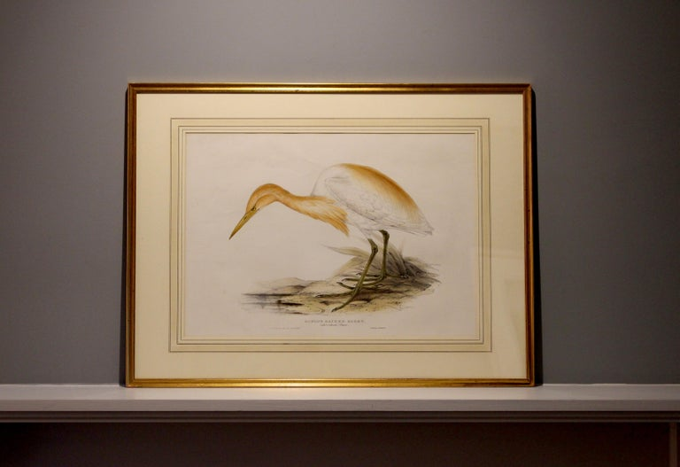 John Gould Lithograph from 'The Birds of Europe' In Good Condition For Sale In Petworth, West Sussex