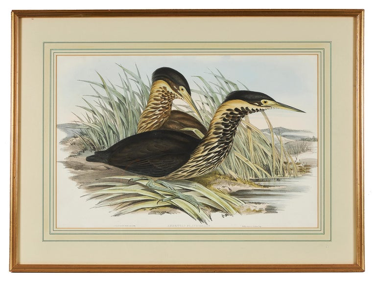 John Gould (English, 1804-1881), 'Ardetta Flavicollis', Australian Bittern, from 'Birds of Australia', hand colored lithograph, published 1840-1848, framed.