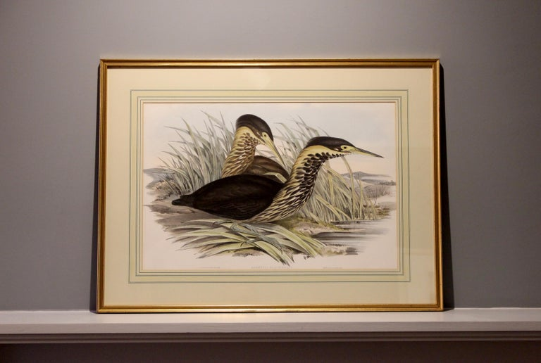 John Gould Lithograph from 'Birds of Australia' In Good Condition For Sale In Petworth, West Sussex