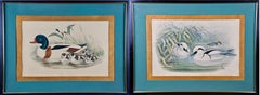 Pair of 19th C. Hand-colored Lithographs of Ducks by John Gould