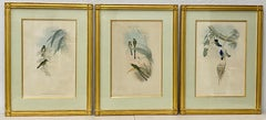 """Set of Three Framed """"Hummingbirds"""" Hand Colored Lithographs by John Gould C.1887"""
