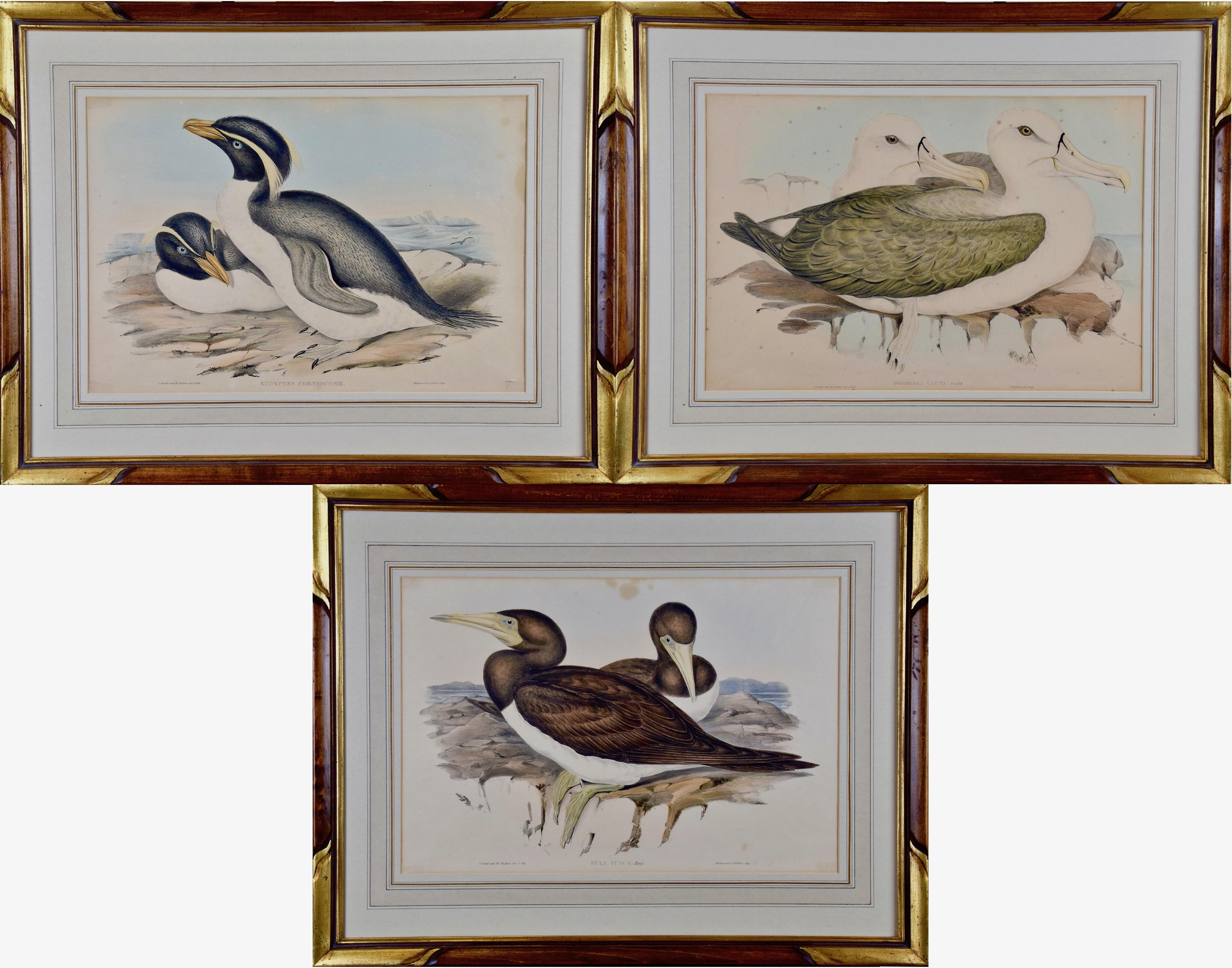 Three Gould Hand-colored Lithographs from Birds of Australia and New Zealand