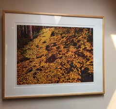 Aspen Trail, Fall, color etching, yellows, gold, brown, green landscape forest
