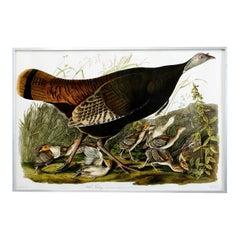 Wild Turkey Plate #6 Havell Oppenheimer Edition