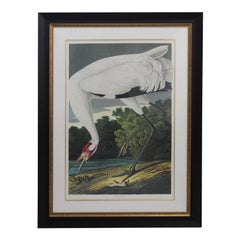 After John James Audubon Print of Whooping Crane by M Bernard Loates