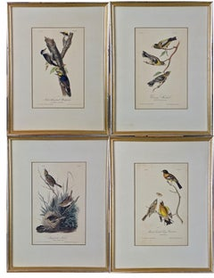 A Group of Four 19th Century Audubon Bird Lithographs