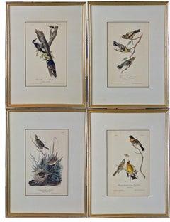 A Group of Four 19th Century Audubon Bird Lithographs