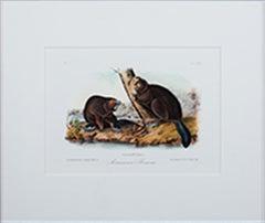 """American Beaver Plate #46 Bowen Edition Octavo Suite, Quadruped"" Litho"