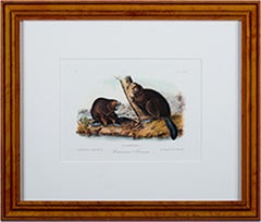 Realist Animal Prints