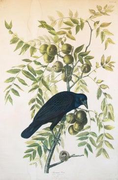American Crow 1858 Chromolithograph by J.J. Audubon Plate, Julius Bien Edition