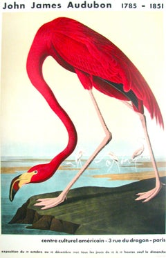 American Flamingo by John James Audubon (1960) - vintage reproduction poster