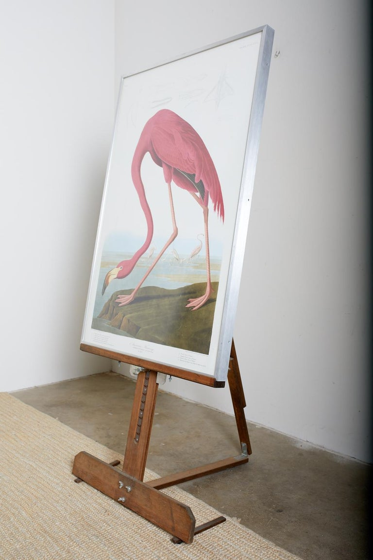 American Flamingo Plate #431 Havell Oppenheimer Edition  For Sale 5