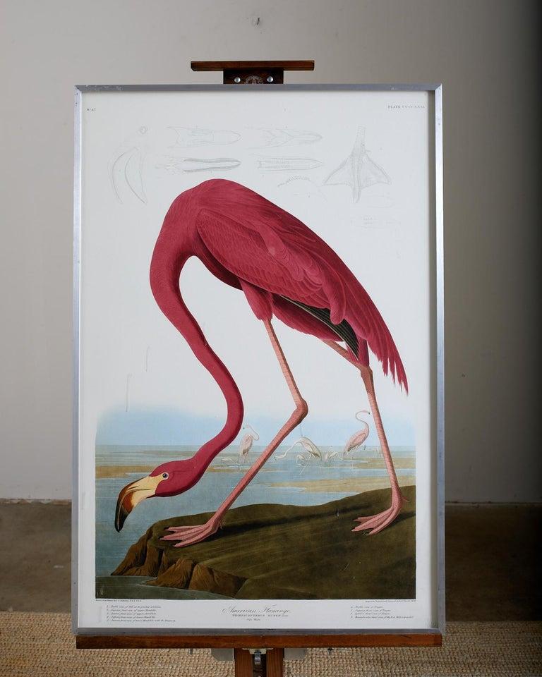 American Flamingo Plate #431 Havell Oppenheimer Edition  - Print by John James Audubon