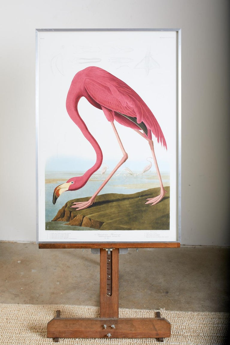 American Flamingo Plate #431 Havell Oppenheimer Edition  - Naturalistic Print by John James Audubon