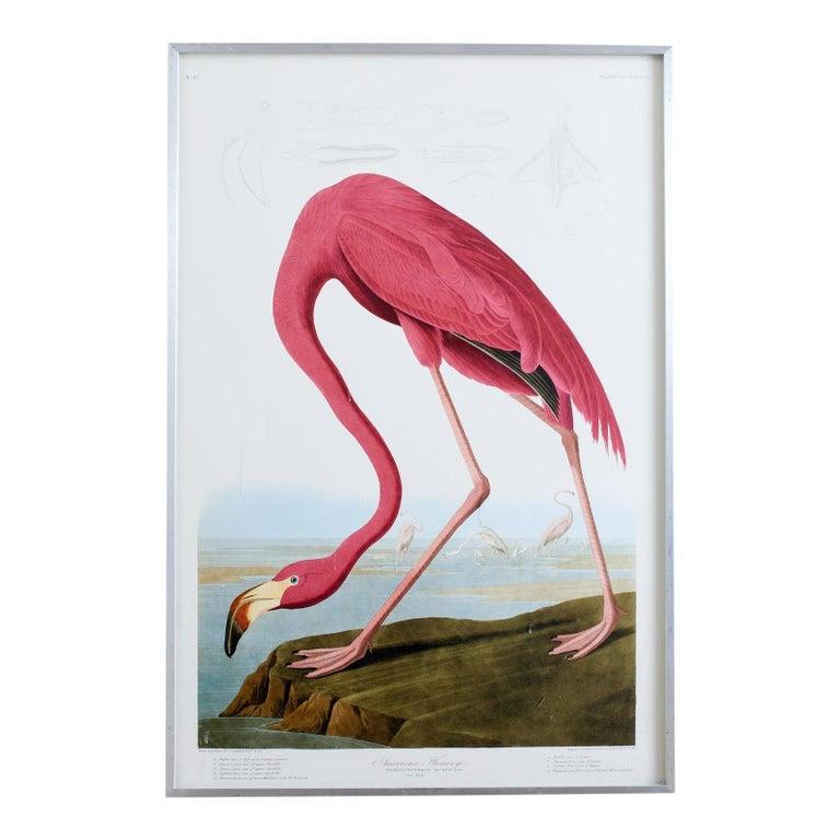 John James Audubon Animal Print - American Flamingo Plate #431 Havell Oppenheimer Edition