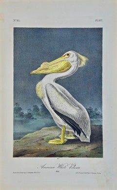 """American White Pelican"", a First Edition Hand Colored Audubon Lithograph"