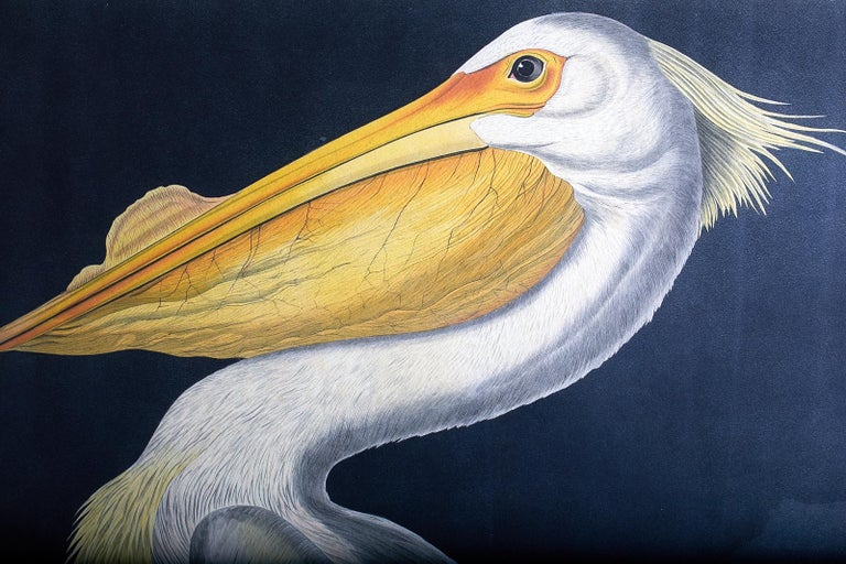 American White Pelican Plate #311 Havell Oppenheimer Edition For Sale 5