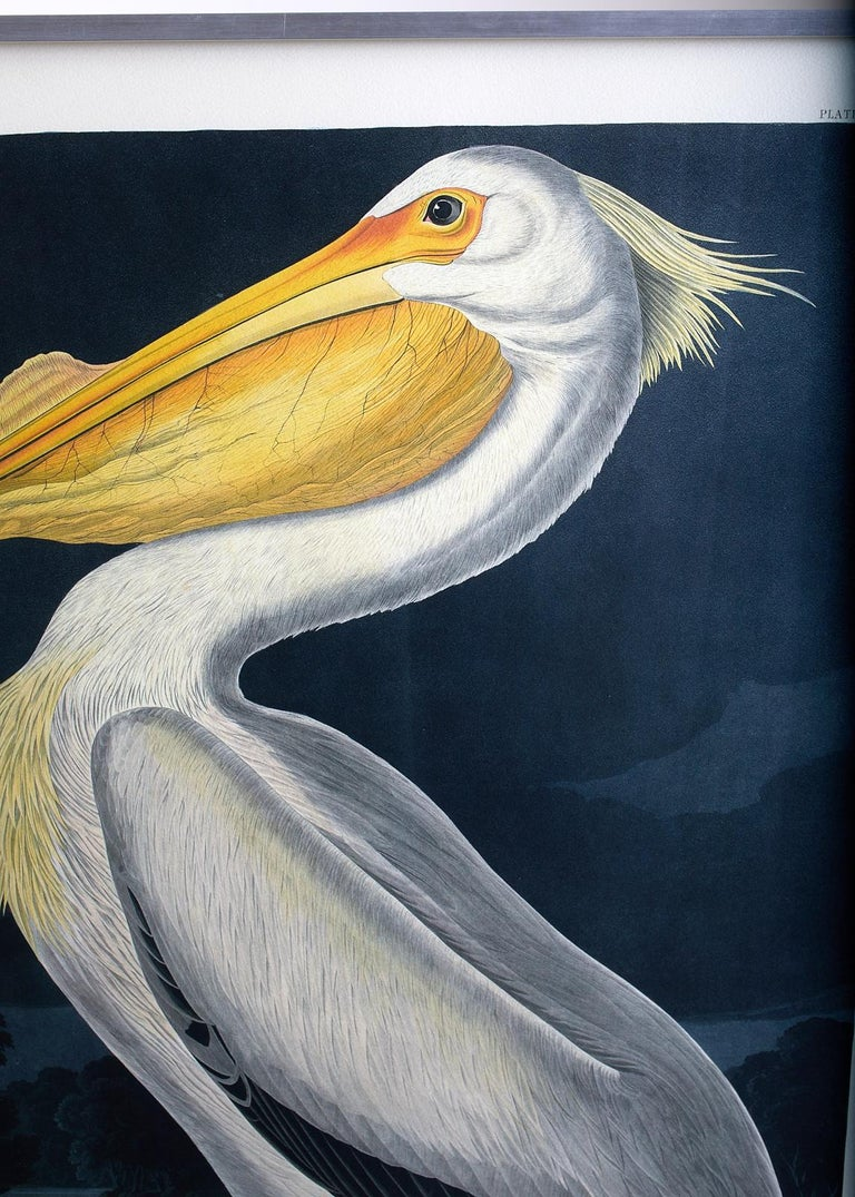American White Pelican Plate #311 Havell Oppenheimer Edition For Sale 6
