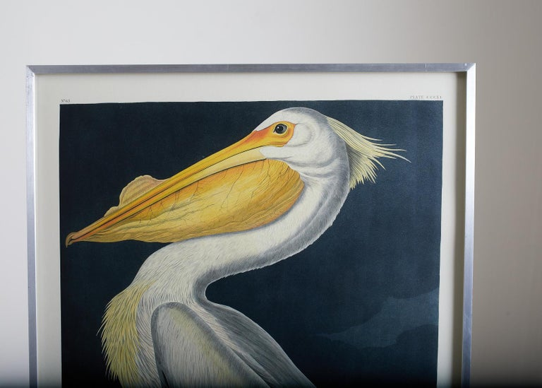 American White Pelican Plate #311 Havell Oppenheimer Edition - Naturalistic Print by John James Audubon