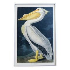 American White Pelican Plate #311 Havell Oppenheimer Edition