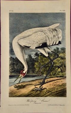 An Original Audubon Hand-colored Bird Lithograph of a Male Whooping Crane