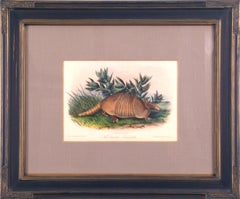 Armadillo Audubon Animal Wildlife