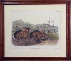 Bachman's Hare, Lithograph, No 22, Plate 108, Original Audubon, 19th Century